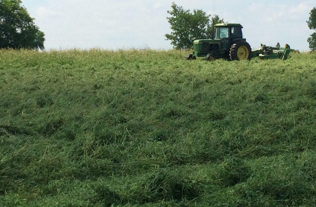 Alfalfa Crop